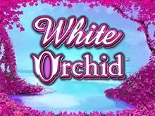 В казино GMSlots Deluxe бесплатно Белая Орхидея